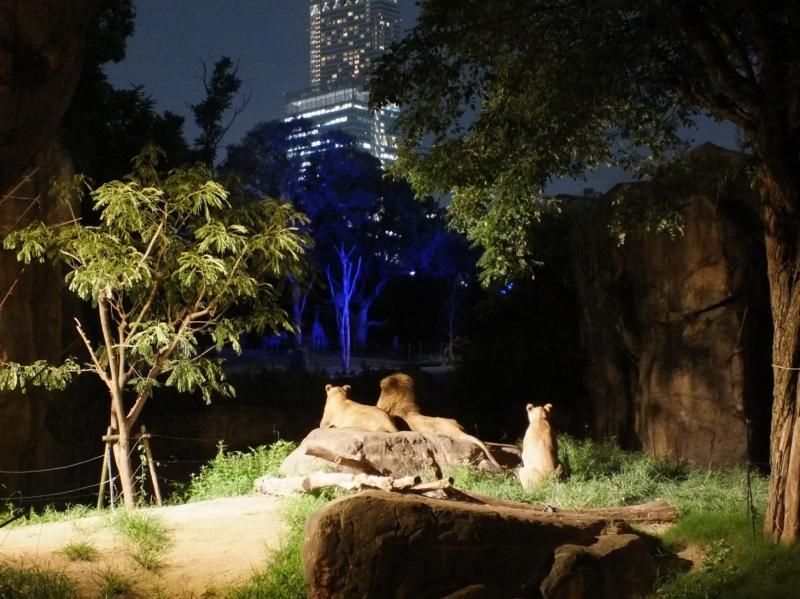 ナイトZOO天王寺動物園