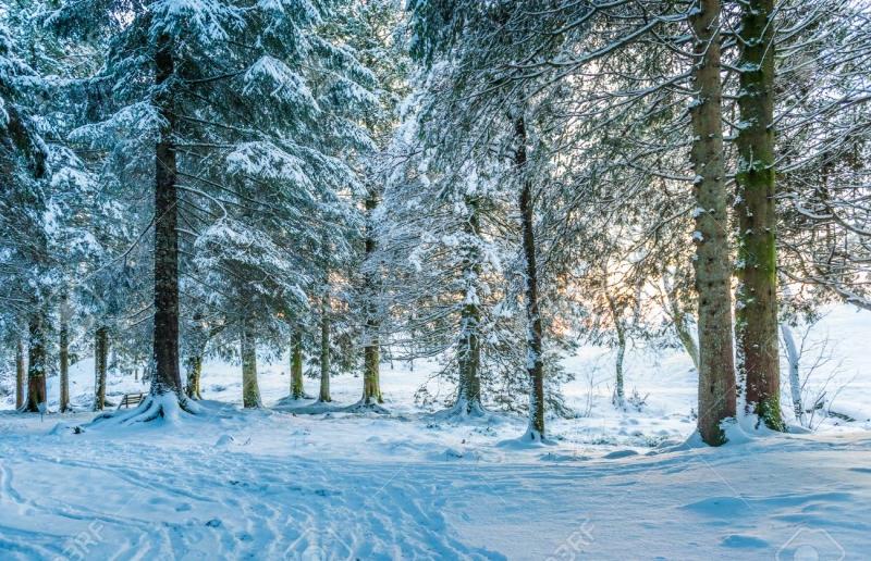 北欧クリスマスツリー